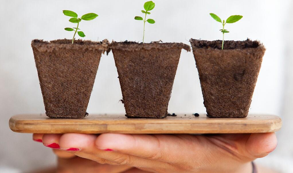 growing-plants-lead-nurturing-international-schools
